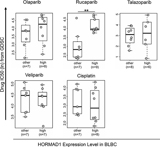 High HORMAD1 expression correlates with reduced PARP inhibitor sensitivity in basal-like breast cancer cell lines.