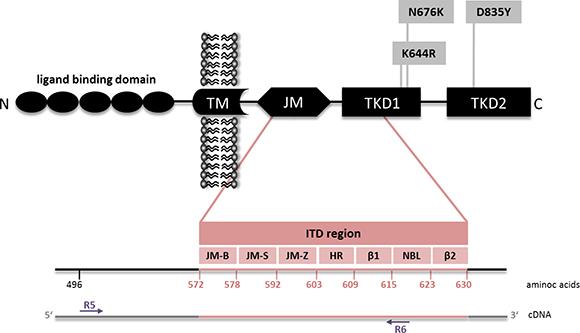 FLT3 mutations.