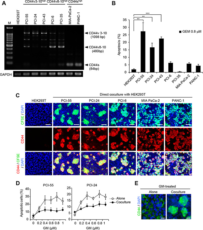 Direct coculture with HEK293T cells induces Ad-MCAs in CD44vhigh/CD44slow epithelial PDAC cells.