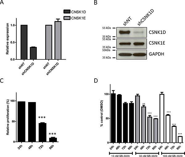 Effect of CSNK1D inactivation on proliferation of the triple negative breast cancer cell line MDA-MB-231.