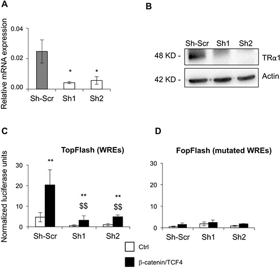 TRα1 enhances b-catenin/TCF4 activity in colorectal cancer cells.