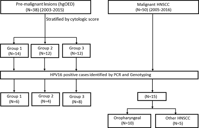 A flow diagram of premalignant and malignant case selection.