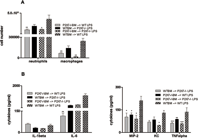Role of P2X7R-expression on the hematopoietic system in LPS-induced lung inflammation.