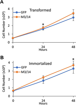 METTL3 and 14 overexpression leads to increased proliferation of transformed and immortal HMECs.