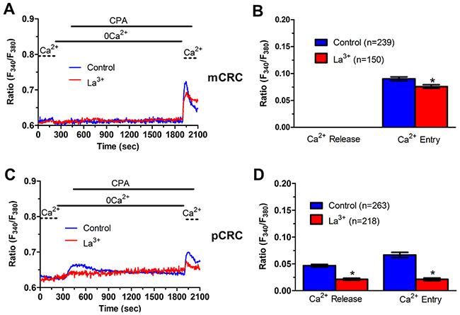 La3+ inhibits ER-dependent Ca2+ release in patients-derived colorectal cancer cells.