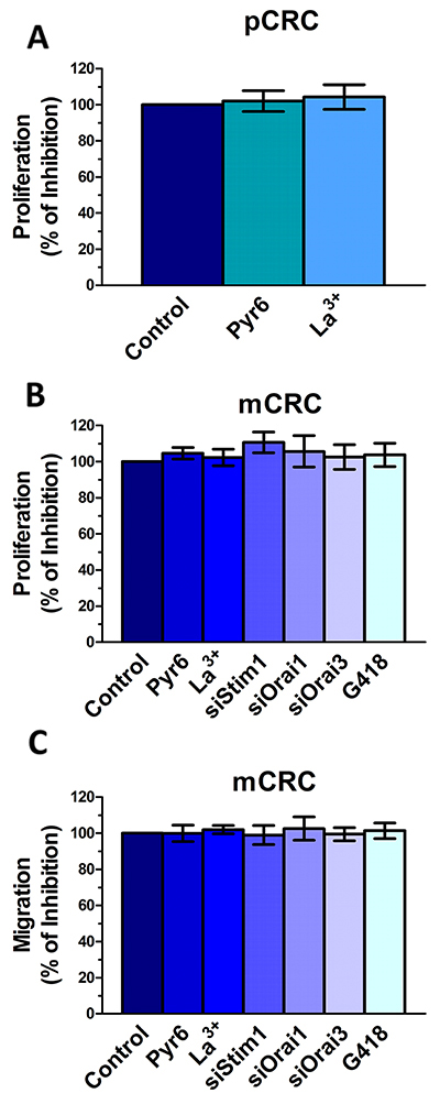 Genetic and pharmacological inhibition of constitutive Ca2+ entry does not affect proliferation and migration in colorectal cancer cells.