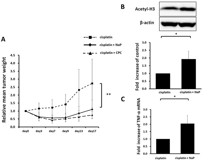 Therapeutic efficacy of NaP + cisplatin in HCC HepG2 xenografts.