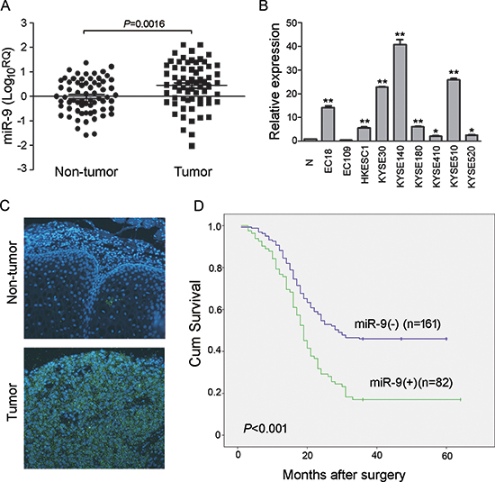 miR-9 was frequently up-regulated in primary ESCC cases and cell lines.