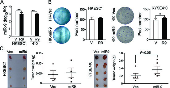 Functional study of miR-9.