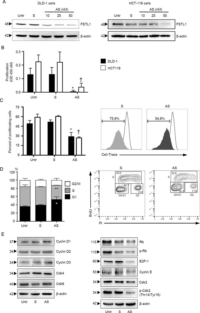 FSTL1 sustains CRC cells proliferation.