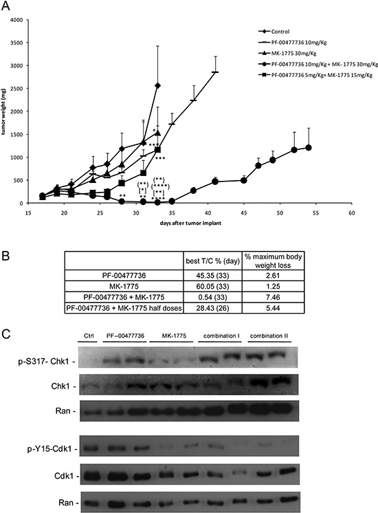 In vivo antitumor effect and target modulation of single and combined treatment in MCL xenografts.