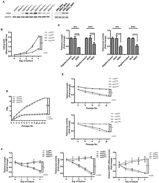 GKN1 induces telomeres shortening in gastric cancer cells.