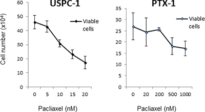 Growth inhibition of uterine serous carcinoma cells after treatment with paclitaxel.