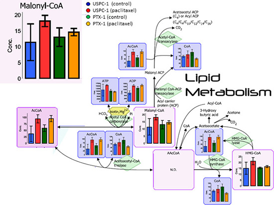 Lipid metabolism analysis after treatment with paclitaxel in uterine serous carcinoma cells.