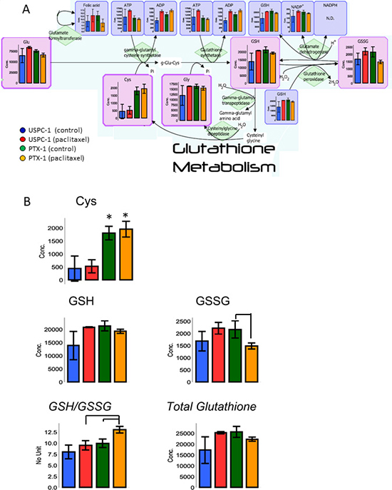 Glutathione (GSH) metabolism analysis after treatment with paclitaxel in uterine serous carcinoma cells.