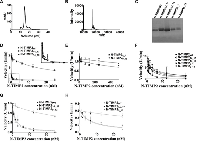 Purification of N-TIMP2 selective variants.