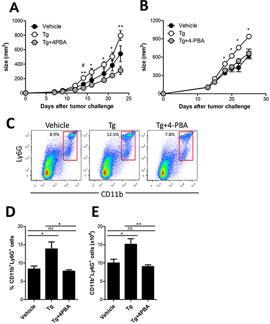 (4-PBA) attenuated Tg-induced MDSC expansion and tumor growth.