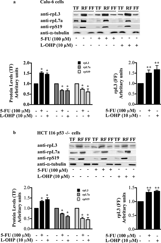 Distribution profile of rpL3 protein upon drug treatments.