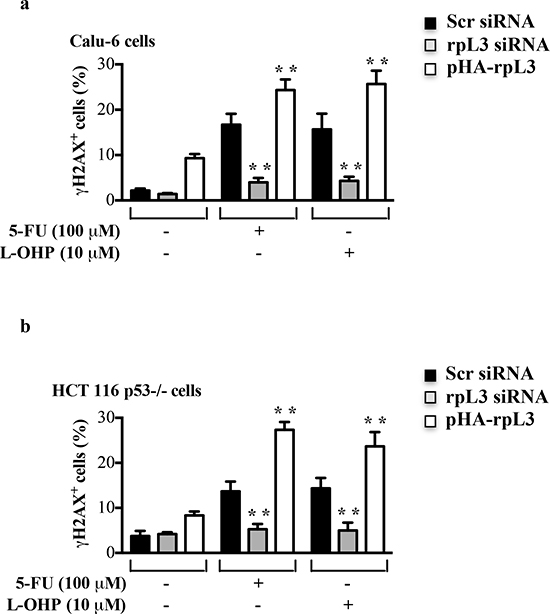 Effect of rpL3 on DNA damage.