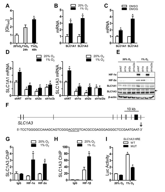 Glutamate release and transporter expression in Hep3B cells.
