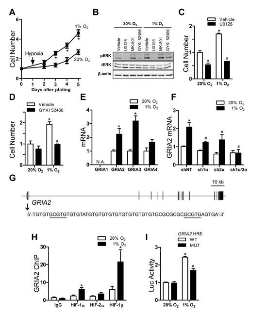 Glutamate receptor signaling and proliferation of Hep3B cells.