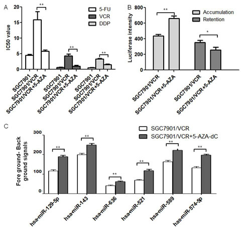 MiR-129-5p was hypo-methylated in gastric cancer MDR cell lines after 5-AZA-dC treatment.