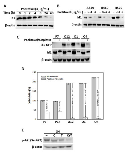 Paclitaxel and cisplatin suppressed Id1 expression and cell viability in NSCLC cells.
