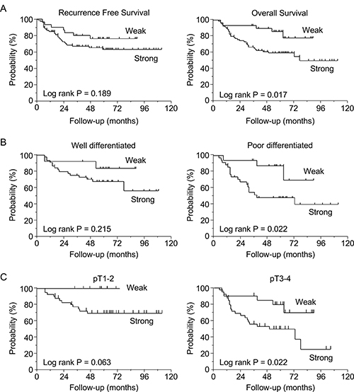 Survival curves based on lipolysis-stimulated lipoprotein receptor (LSR) expression levels in gastric cancer patients (N = 110).