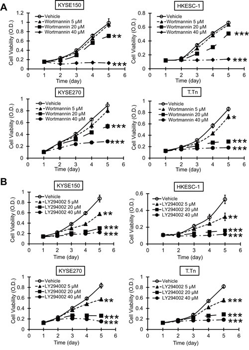 Effects of PI3K/AKT inhibitors on esophageal cancer cell proliferation.