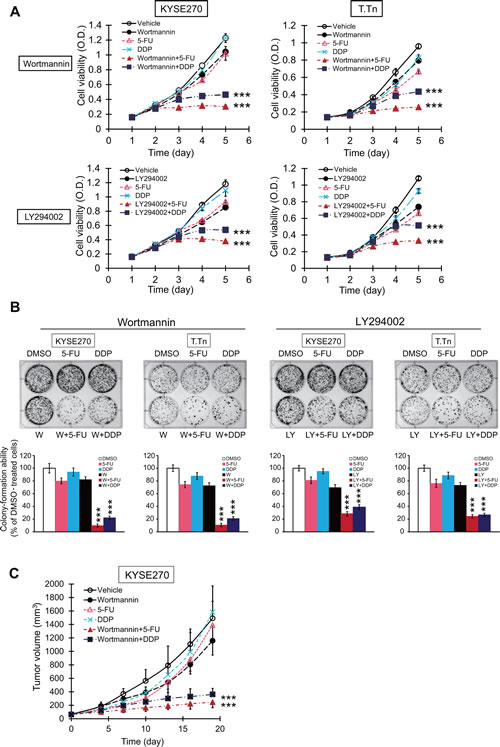 Effects of PI3K/AKT inhibitors on sensitivity of esophageal cancer cells to conventional chemotherapeutic drug