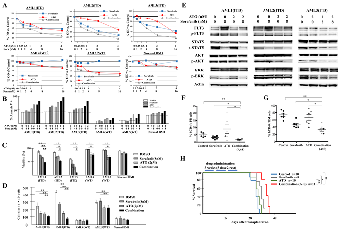 Combination of ATO with sorafenib increases anti-leukemic effects on FLT3/ITD+ patient primary cells and inhibits growth of transplanted leukemia cells