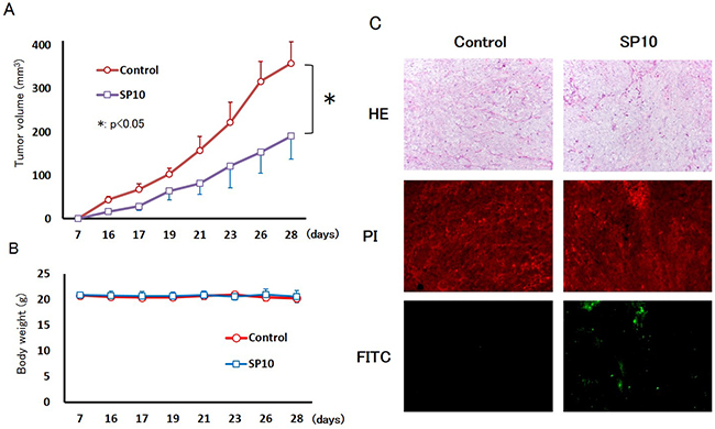 Anti-tumor effects of SP10 in an HCT116 tumor xenograft model.