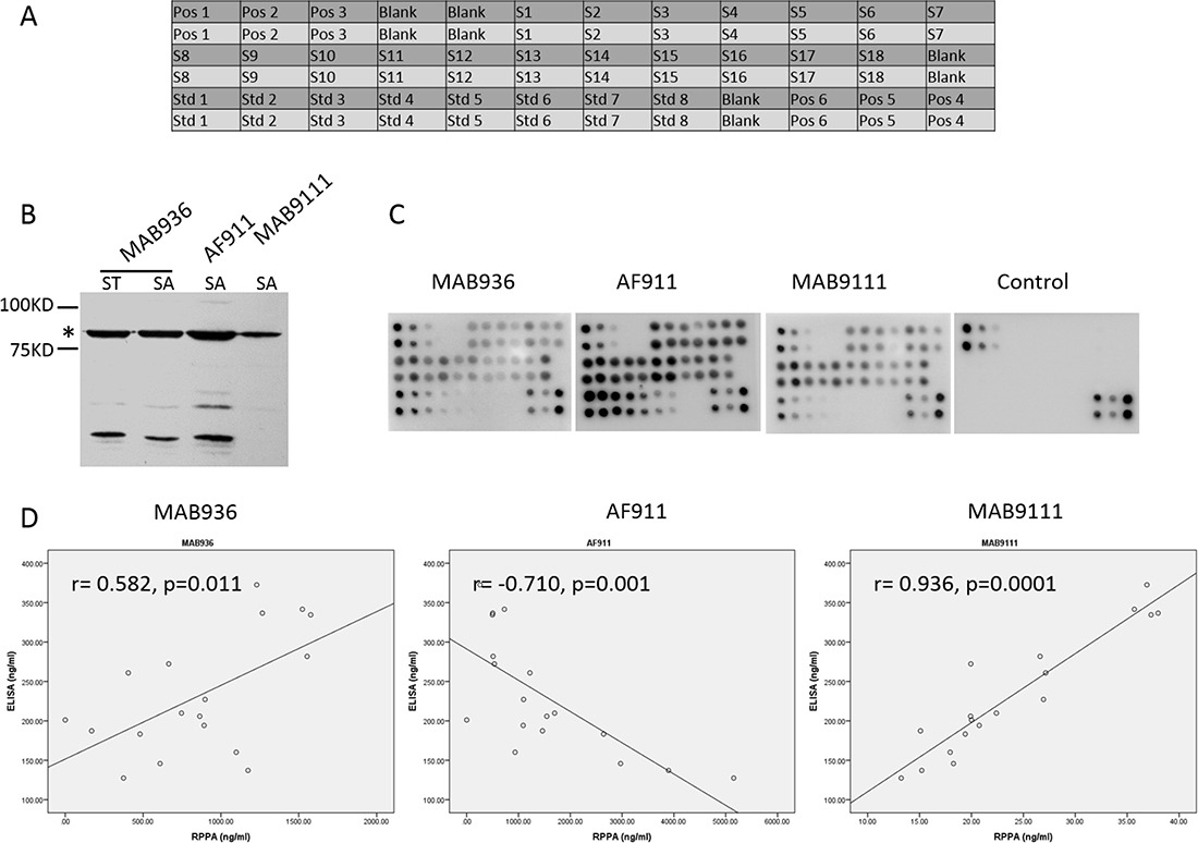 Detection of MMP-9 in 18 serum samples by established RPPA system and investigation of the quality of antibodies employed in RPPA showing different correlation of RPPA and ELISA.