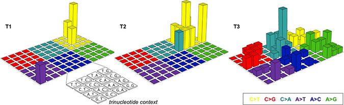 Lego plots of mutational patterns in a three-base context.