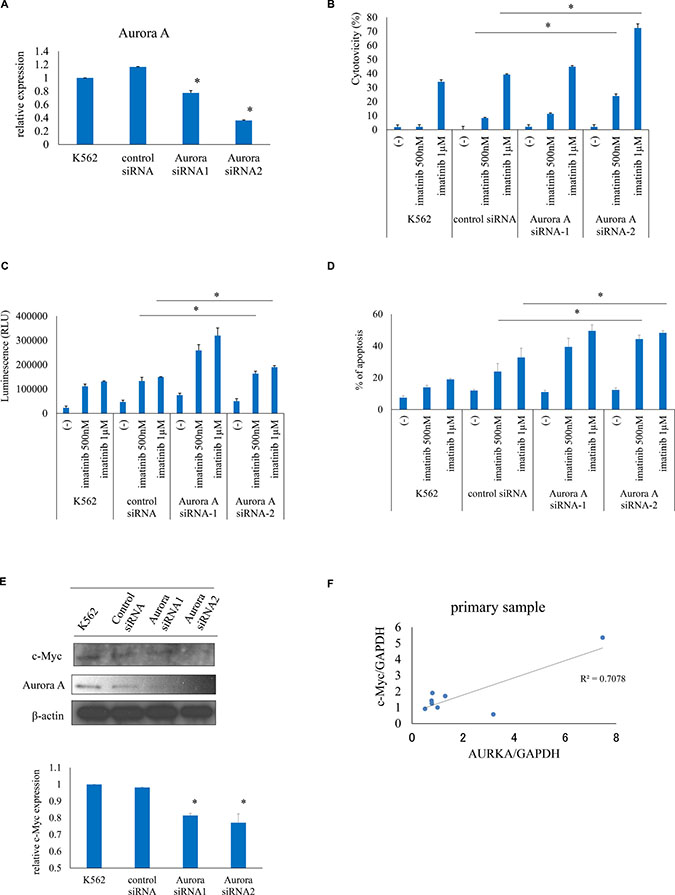 Aurora A knockdown increases ABL TKI activity against Ph+ cells.