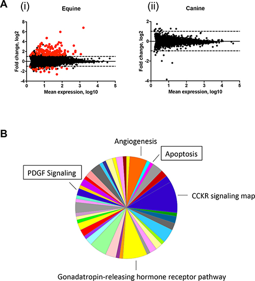 Apoptosis and PDGF signaling pathways are upregulated in equine MaSC following DMBA treatment.