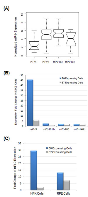 miR-9 expression was significantly correlated with HPV expression status.