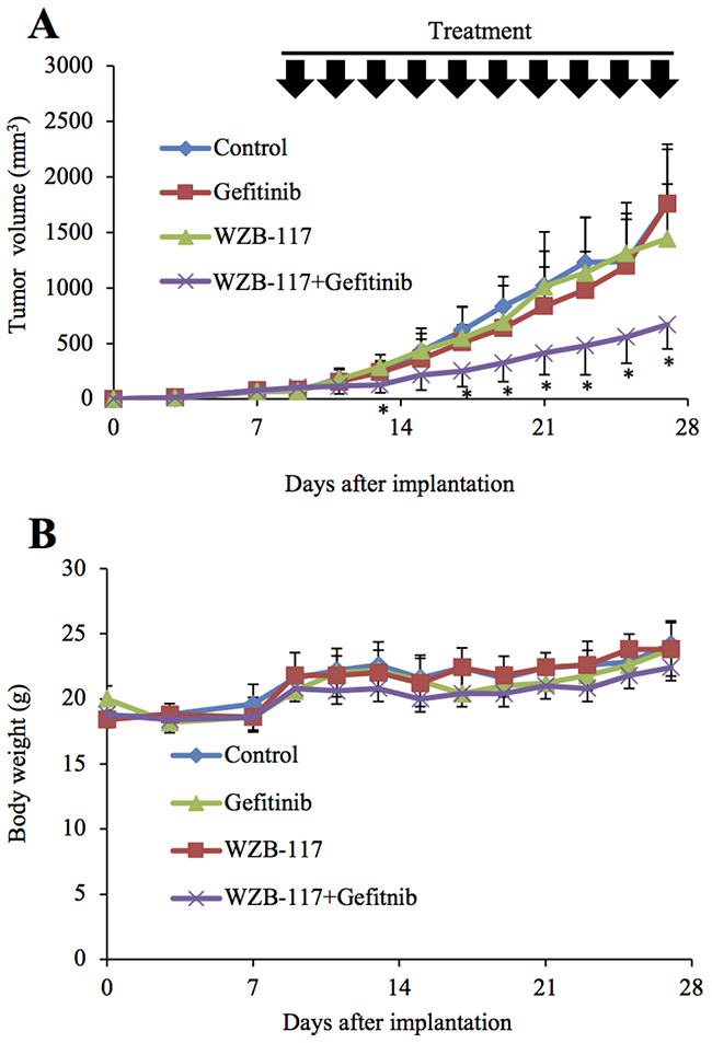 GLUT1 inhibition augments the anti-tumor effect of gefitinib in vivo.