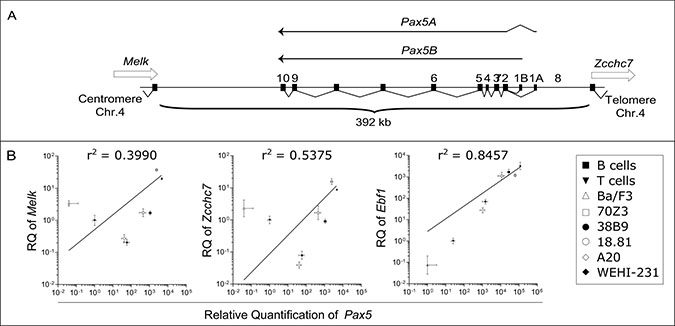 Expression of Pax5 isoforms is independent of the expression of neighboring genes.