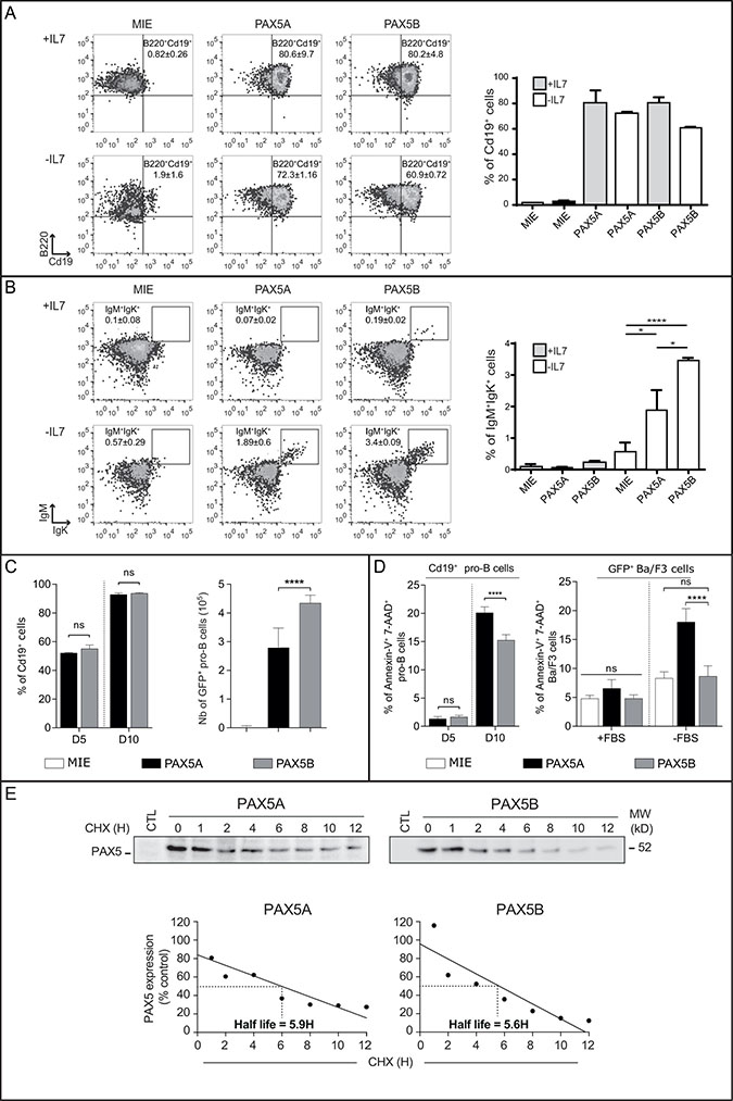 Both PAX5A and PAX5B can restore B cell differentiation program in complemented Pax5-/- pro-B cells.