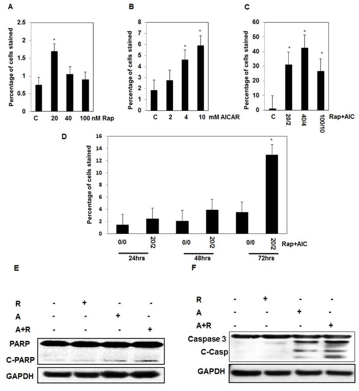 Significant increase in number apoptotic cells is dependent on drug concentration and duration of exposure in AML cells.