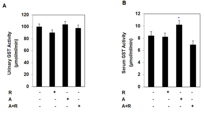 Drugs alone and in combination show no nephrotxoicity in treated mice.