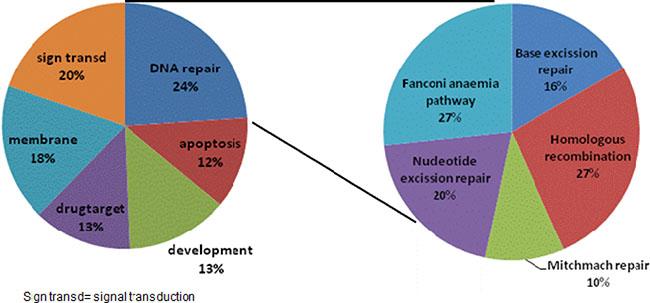 Gene Ontology pathways correlating with MAP17 expression.