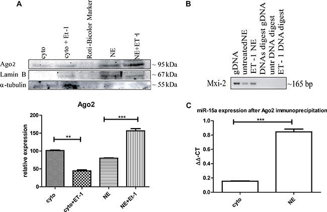 Ago2 involvement in miR:DNA interaction.