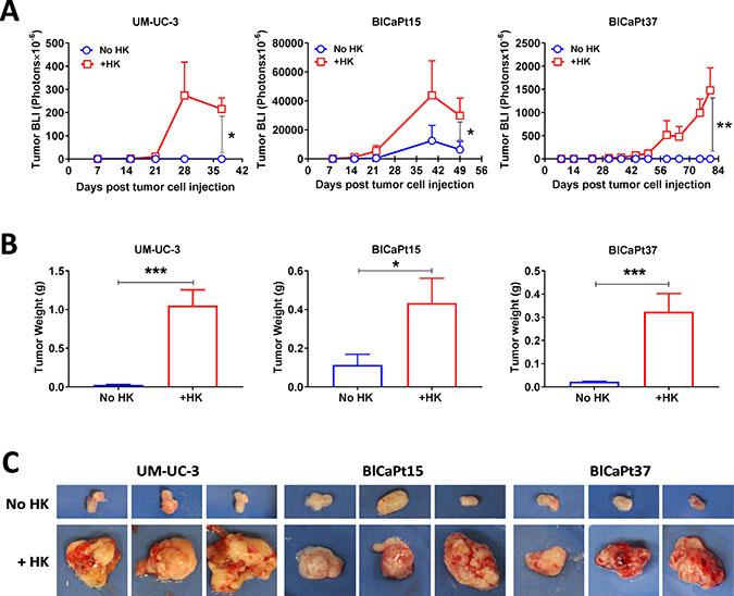 LN stromal HK cells stimulate UCC tumor growth in the IB model.