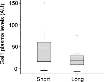 Gal-1 plasma levels in PDA patients displaying short-(<6 months) or long-term survival (≥6 months).