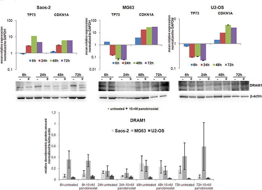 Expression of TP73, CDKN1A and DRAM1.