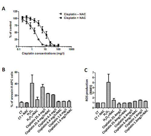 Effect of cisplatin on MPM cell lines.