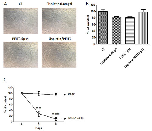 Effect of PEITC and cisplatin alone or in combination on primary mesothelial cells.