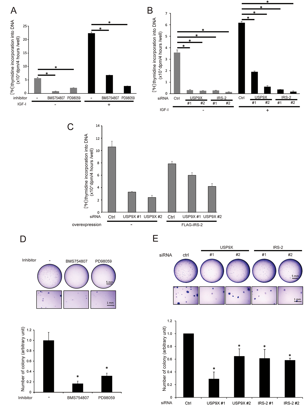 USP9X contributes to anchorage-dependent/independent cell growth induced by the activation of IGF-IR-IRS-2-Erk1/2 pathway.